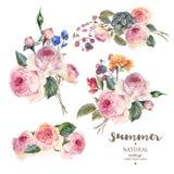 Ställ in den blom- vektorbuketten för tappning av engelska rosor Royaltyfri Bild