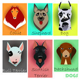 Ställ in med rashundar Fotografering för Bildbyråer