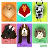 Ställ in med rashundar Royaltyfria Bilder