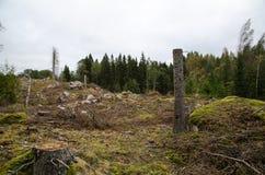 Stümpfe in einem eindeutigen Wald Stockbild