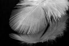 Stäng sig upp av en vit fjäder på svart reflekterande bakgrund Arkivbilder