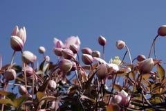 Stoßen der Blumen-Knospen Stockfoto