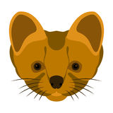 Stoat head vector illustration style Flat. Face Royalty Free Stock Photography