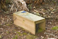 Stoat Trap Stock Photography