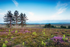 Stoborough Heath in Dorset Royalty Free Stock Images