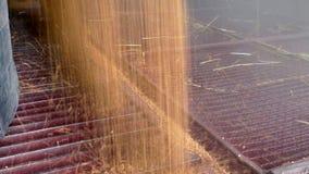 Stoccaggio dei cereali dopo il raccolto stock footage