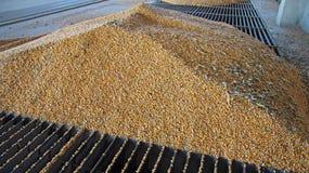 Stoccaggio del grano Immagine Stock Libera da Diritti