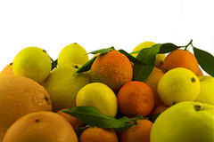 Stock of citrus fruits. A stock of different citrus fruits Stock Images