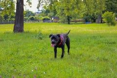 Stock corso Weg im Sommerstadtpark Lizenzfreie Stockfotos