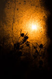 Stock des getrockneten Grases unter dem Sonnenstrahl Stockfotos