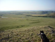 Stock dog surveying the prairie Stock Photography