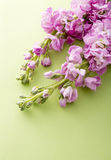 Stock flower. On green background Royalty Free Stock Photos