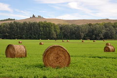 Stock of hay Stock Photography