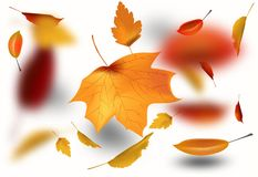 Autumnal foliage fall and poplar leaf flying in wind motion blur. Autumn design. Templates for placards, banners, flyers Royalty Free Stock Photography