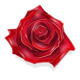 Stock Illustration Scarlet Rose. On the White Background Royalty Free Stock Photos