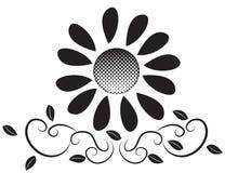 Stock Image: Big Black Flower Royalty Free Stock Image