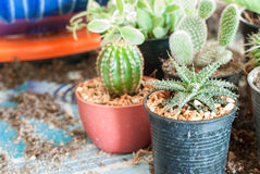 Stock image of cactus Stock Photography