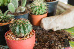Stock image of cactus Royalty Free Stock Photo