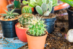 Stock image of cactus Stock Images
