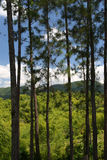Stock image of Croydon Plantation, Jamaica Stock Images