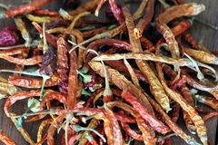 Stock Image of Dried Chillis. A stock image of dried chilly. Grown in my garden stock illustration