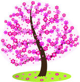 Flowering tree. Stock Image