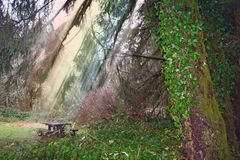 Stock image of Forest after rain. Spiritual and inspirational image of wild forest of Oregon with sun rays after rain stock photos