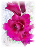 Stock image of Gladiolus Under Rain Stock Images
