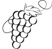 Stock Image: Grapes Royalty Free Stock Photography