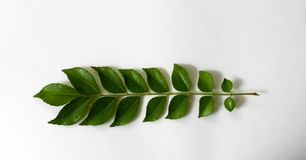 Stock image of green neem leaves royalty free stock images