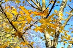 Stock image of Kelvingrove Park - Glasgow, Scotland Royalty Free Stock Image