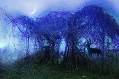 Stock image of mystical thicket. Spiritual and inspirational image of wild misty thicket at night royalty free illustration
