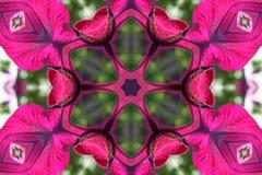Stock Image Of Petunia Kaleidoscope Royalty Free Stock Photography