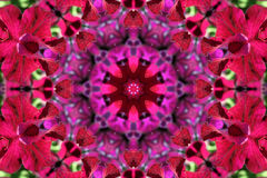 Stock image of Petunia Kaleidoscope Stock Photos