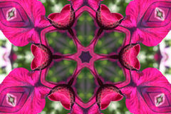 Stock image of Petunia Kaleidoscope. Beautiful bright kaleidoscope with colorful petunia . Background for summer or spring projects stock illustration