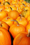 Stock image of pumpkin display during Harvest Festival in New England, USA.  Royalty Free Stock Photo