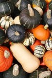 Stock image of pumpkin display during Harvest Festival in New England, USA.  Royalty Free Stock Photos