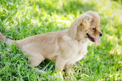 Stock image of a puppy in the park Stock Photo