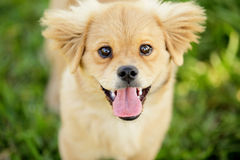 Stock image of a puppy in the park Stock Image