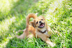 Stock image of a puppy in the park Stock Photos