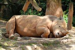 Stock image of Rhino / rhinoceros.  stock photos