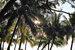 Stock image of Sandy beach in Batu Ferringhi, Penang Island, Malaysia Stock Image