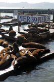 Stock image of Sea lions at Pier 39, San Francisco, USA Stock Images