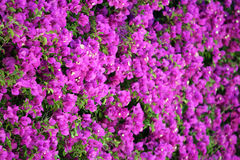 Stock image of Spring Garden Royalty Free Stock Images