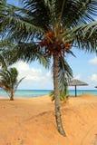 Stock image of Tioman island, Malaysia Royalty Free Stock Photography