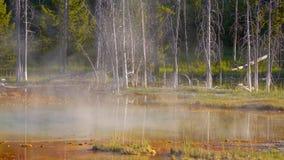 Stock image of Upper Geyser Basin, Yellowstone National Park, USA.  stock photography