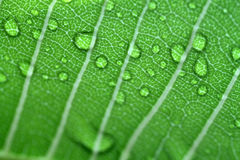 Stock image of Water drops on leaf closeup Royalty Free Stock Photography