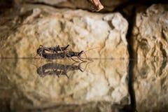 Stock-Insekt lizenzfreie stockfotografie
