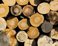 Stock of logs Stock Images