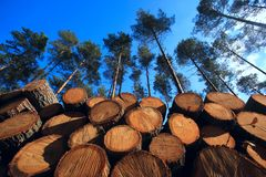 Free Stock Of Timber In The Forest Royalty Free Stock Image - 131709196